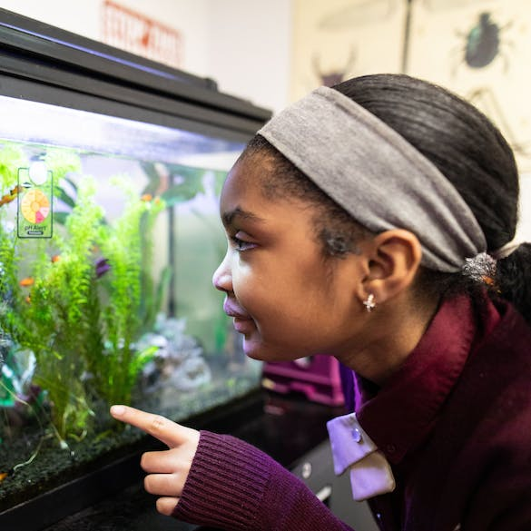 A young female student points while looking in an aquarium